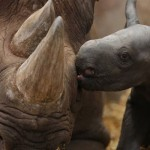 Inroads in war against rhino poaching