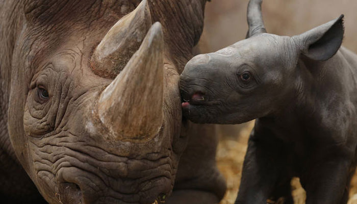 Rhino - Save