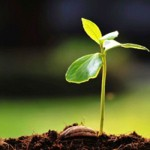 Initiatives to be celebrated on Arbor Day