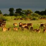 National Parks Week 2012