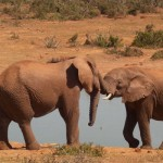 S Africans must understand conservation