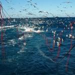Fish stocks on the decline