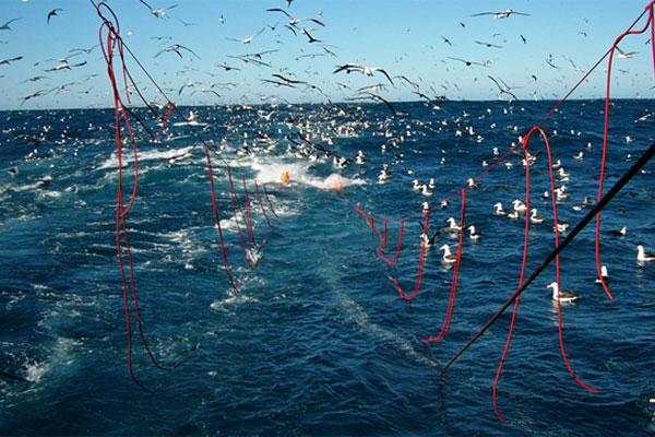Wild fish stocks on the decline