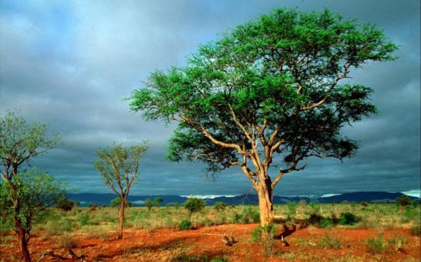 Kruger - Tourism