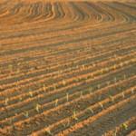 Govt hails improvement on land reform
