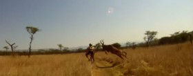 MTB hit by Antelope
