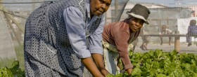 Organic farming changes villagers' lives